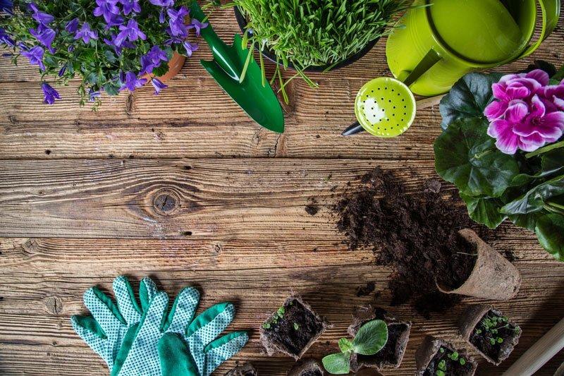 Simple & Effective Gardening Tricks