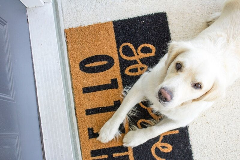dog laying on welcome mat